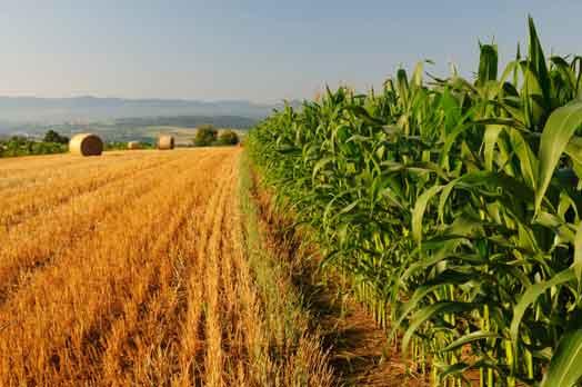 agricoltura-1 Agricoltura sociale